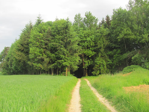 Wanderung Marchtrenk Weisskirchen wandern wanderweg